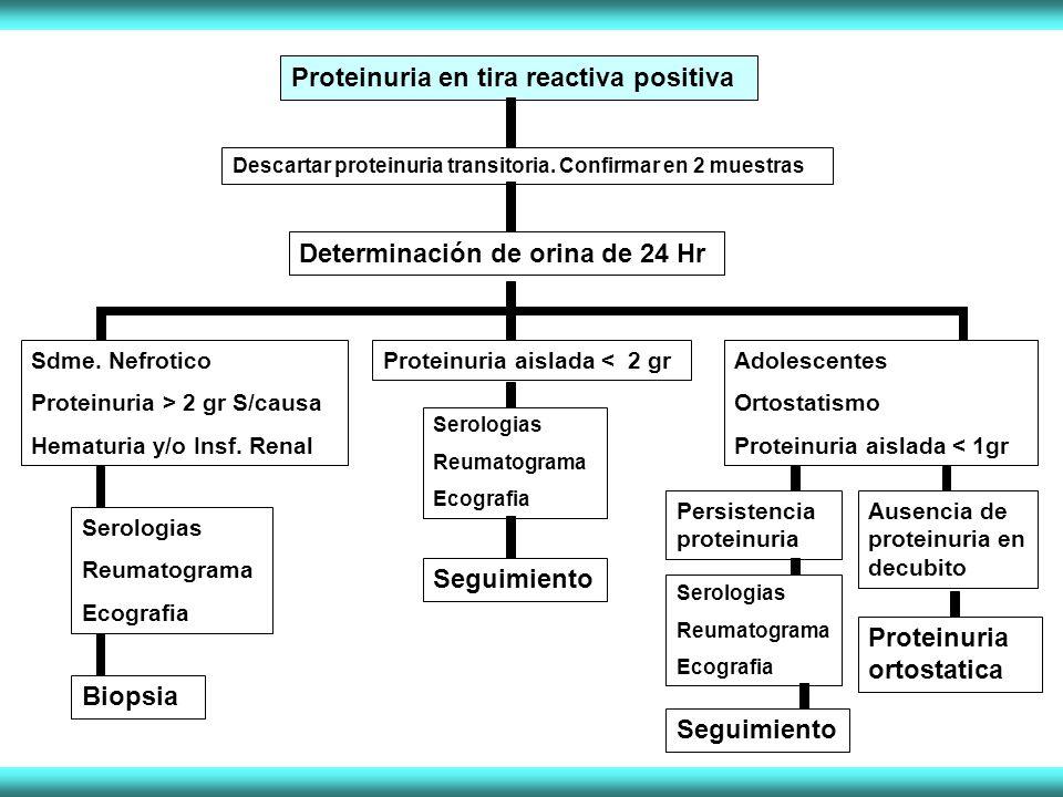 Proteinuria en tira reactiva positiva Descartar proteinuria transitoria. Confirmar en 2 muestras Determinación de orina de 24 Hr Sdme. Nefrotico Prote