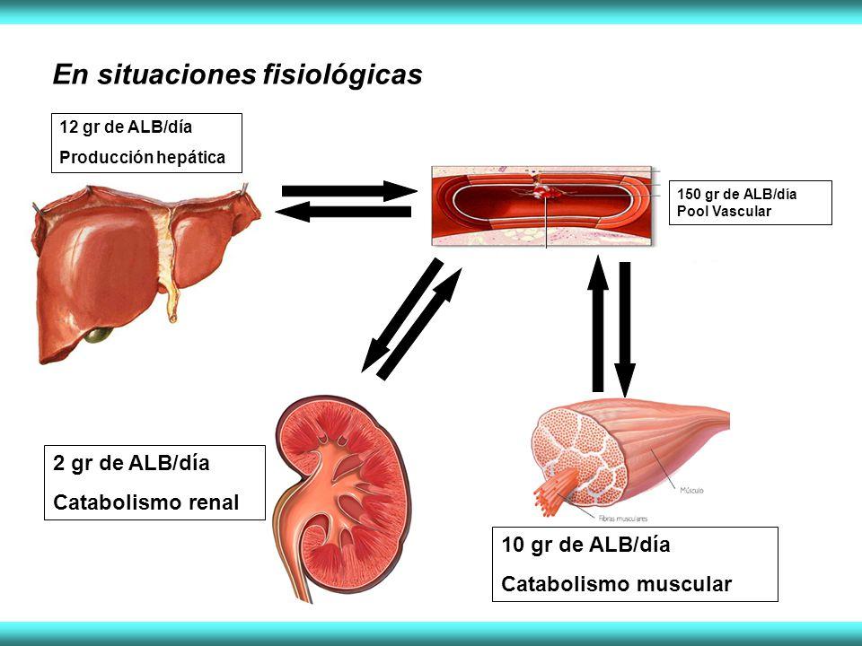 En situaciones fisiológicas 12 gr de ALB/día Producción hepática 150 gr de ALB/día Pool Vascular 10 gr de ALB/día Catabolismo muscular 2 gr de ALB/día Catabolismo renal