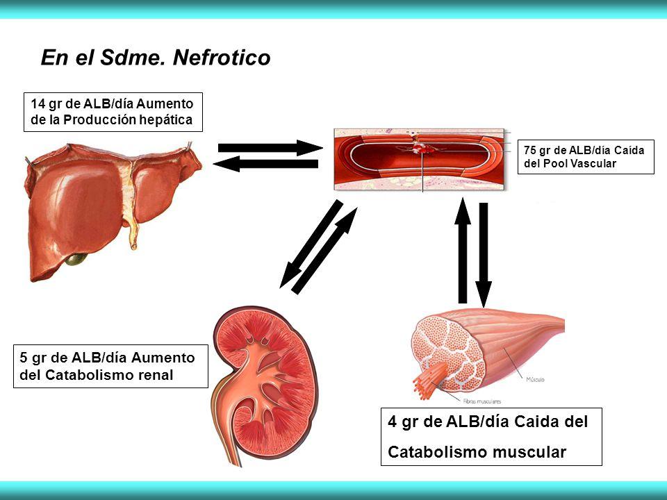 En el Sdme. Nefrotico 14 gr de ALB/día Aumento de la Producción hepática 75 gr de ALB/día Caída del Pool Vascular 4 gr de ALB/día Caida del Catabolism
