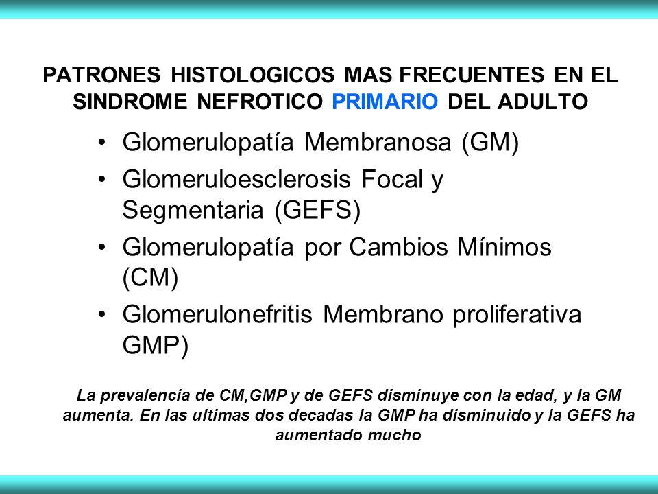 PATRONES HISTOLOGICOS MAS FRECUENTES EN EL SINDROME NEFROTICO PRIMARIO DEL ADULTO Glomerulopatía Membranosa (GM) Glomeruloesclerosis Focal y Segmentaria (GEFS) Glomerulopatía por Cambios Mínimos (CM) Glomerulonefritis Membrano proliferativa GMP) La prevalencia de CM,GMP y de GEFS disminuye con la edad, y la GM aumenta.