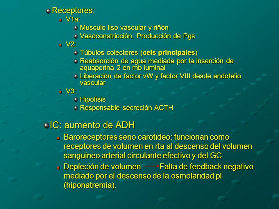 Receptores: V1a: V1a: Musculo liso vascular y riñón Vasoconstricción.