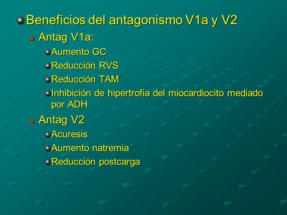 Beneficios del antagonismo V1a y V2 Antag V1a: Antag V1a: Aumento GC Reducción RVS Reducción TAM Inhibición de hipertrofia del miocardiocito mediado por ADH Antag V2 Antag V2Acuresis Aumento natremia Reducción postcarga