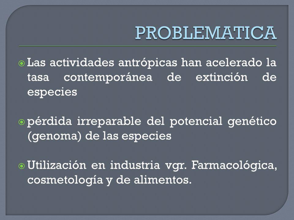 Las actividades antrópicas han acelerado la tasa contemporánea de extinción de especies pérdida irreparable del potencial genético (genoma) de las esp