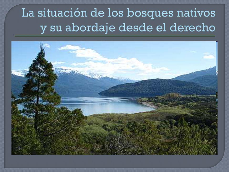 La situación de los bosques nativos y su abordaje desde el derecho