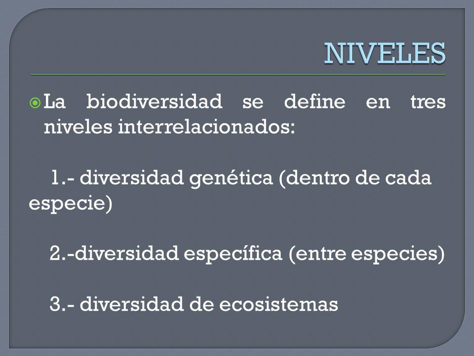 La biodiversidad se define en tres niveles interrelacionados: 1.- diversidad genética (dentro de cada especie) 2.-diversidad específica (entre especie