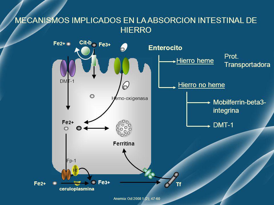 Anemia: Oct 2008 1 (2); 47-60 Fe 2+ Fe 3+ Fe 2+ Ferritina Enterocito Hierro heme Prot. Transportadora Hemo-oxigenasa Hierro no heme Mobilferrin-beta3-