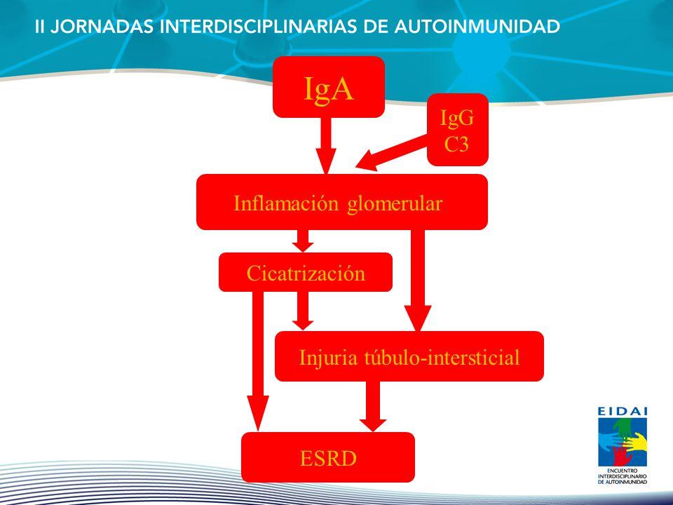 IgA Inflamación glomerular Cicatrización Injuria túbulo-intersticial ESRD IgG C3