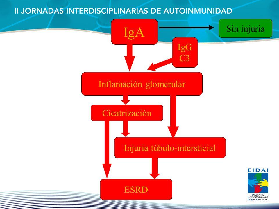 IgA Inflamación glomerular Cicatrización Injuria túbulo-intersticial ESRD Sin injuria IgG C3