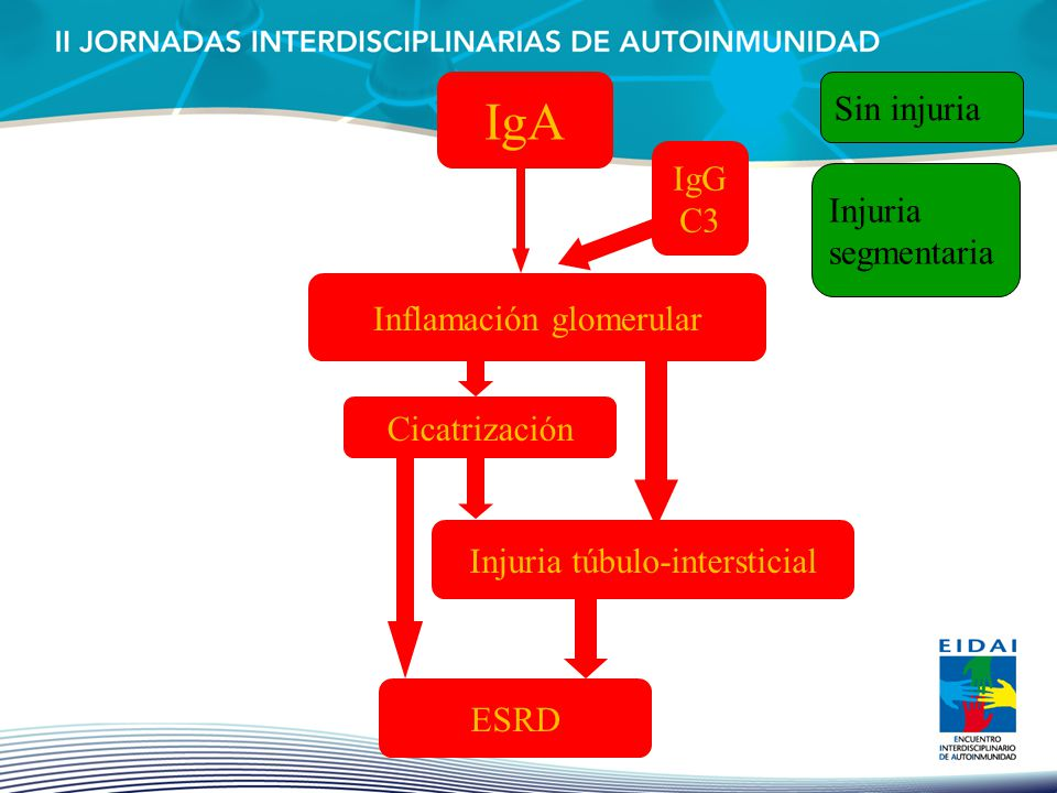 IgA Inflamación glomerular Cicatrización Injuria túbulo-intersticial ESRD Sin injuria IgG C3 Injuria segmentaria