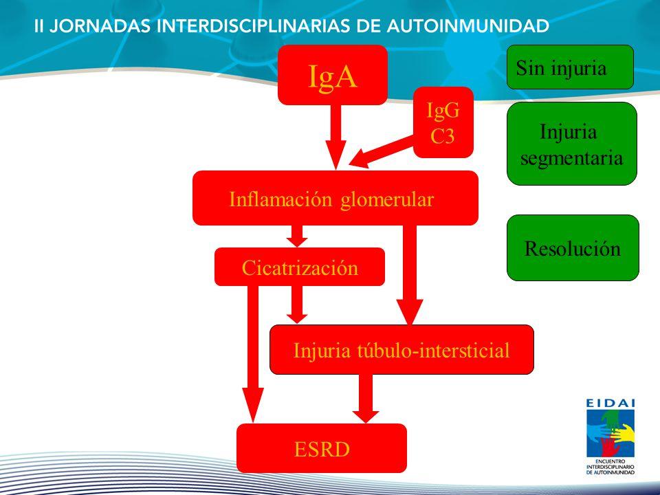 IgA Inflamación glomerular Resolución Cicatrización Injuria túbulo-intersticial ESRD Sin injuria IgG C3 Injuria segmentaria