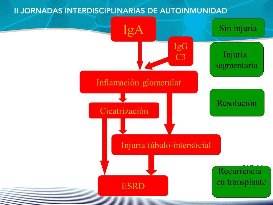 IgA Inflamación glomerular Resolución Cicatrización Injuria túbulo-intersticial ESRD Sin injuria IgG C3 Injuria segmentaria Recurrencia en transplante