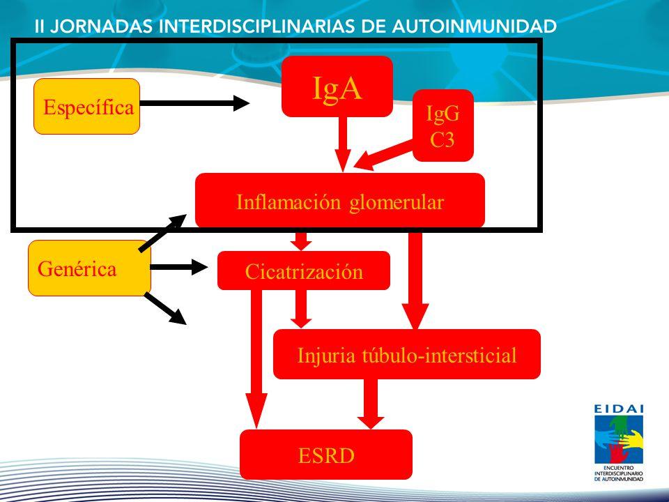 IgA Inflamación glomerular Cicatrización Injuria túbulo-intersticial ESRD IgG C3 Específica Genérica