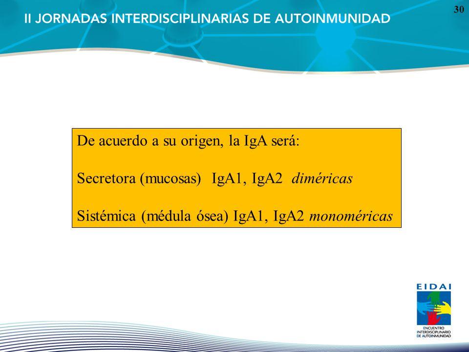 30 De acuerdo a su origen, la IgA será: Secretora (mucosas) IgA1, IgA2 diméricas Sistémica (médula ósea) IgA1, IgA2 monoméricas
