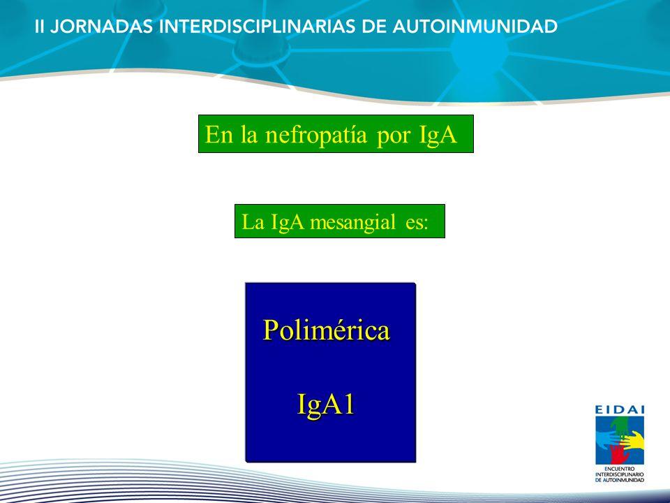 En la nefropatía por IgA La IgA mesangial es: Polimérica Polimérica IgA1 IgA1