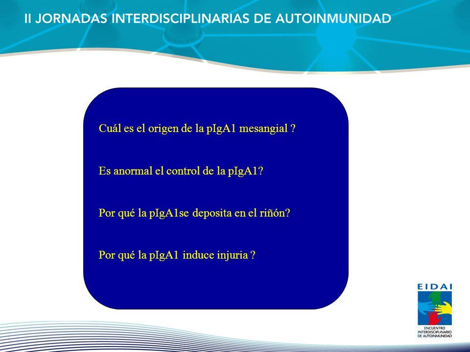 Cuál es el origen de la pIgA1 mesangial ? Es anormal el control de la pIgA1? Por qué la pIgA1se deposita en el riñón? Por qué la pIgA1 induce injuria