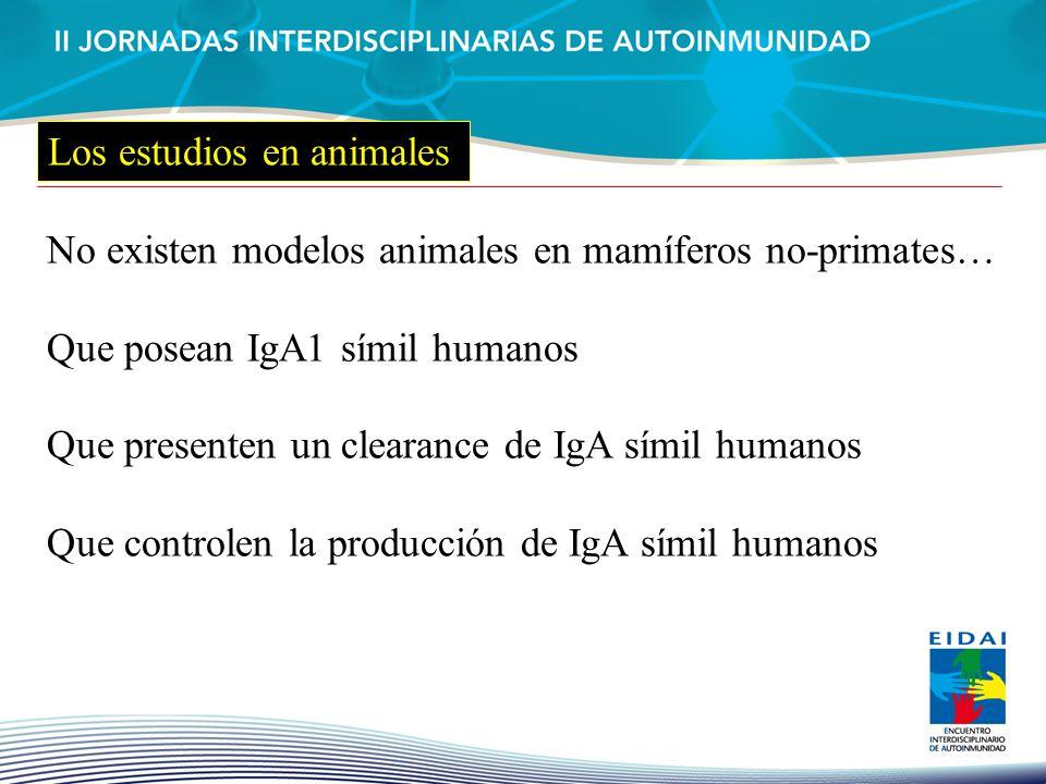 No existen modelos animales en mamíferos no-primates… Que posean IgA1 símil humanos Que presenten un clearance de IgA símil humanos Que controlen la p