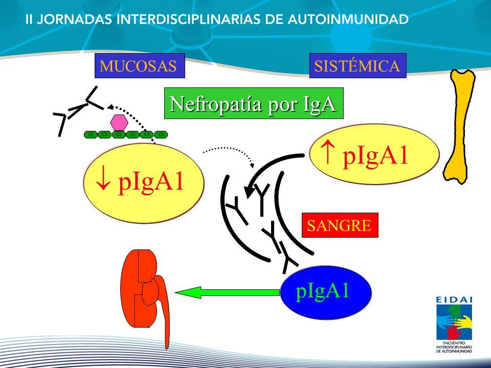 pIgA1 MUCOSAS pIgA1 SISTÉMICA IgA Nephropathy SANGRE pIgA1 Nefropatía por IgA