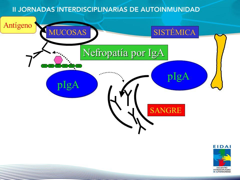 pIgA MUCOSAL pIgA Antígeno MUCOSASSISTÉMICA Nefropatía por IgA SANGRE