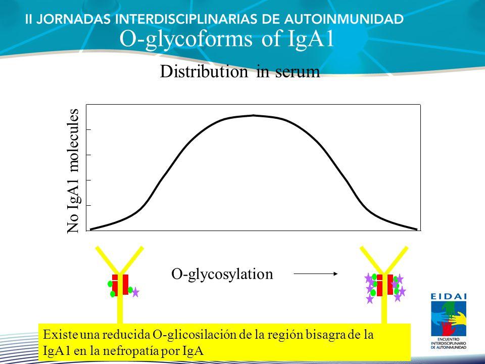 O-glycoforms of IgA1 Distribution in serum No IgA1 molecules O-glycosylation Existe una reducida O-glicosilación de la región bisagra de la IgA1 en la