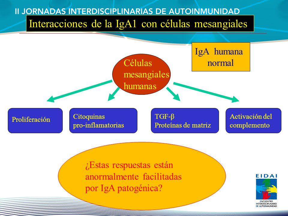 Proliferación Citoquinas pro-inflamatorias TGF-β Proteínas de matriz Activación del complemento ¿Estas respuestas están anormalmente facilitadas por I