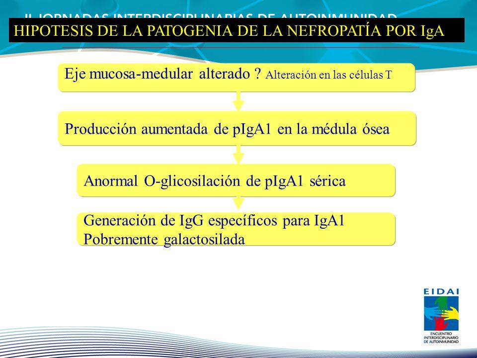 Eje mucosa-medular alterado ? Alteración en las células T Producción aumentada de pIgA1 en la médula ósea Anormal O-glicosilación de pIgA1 sérica Gene