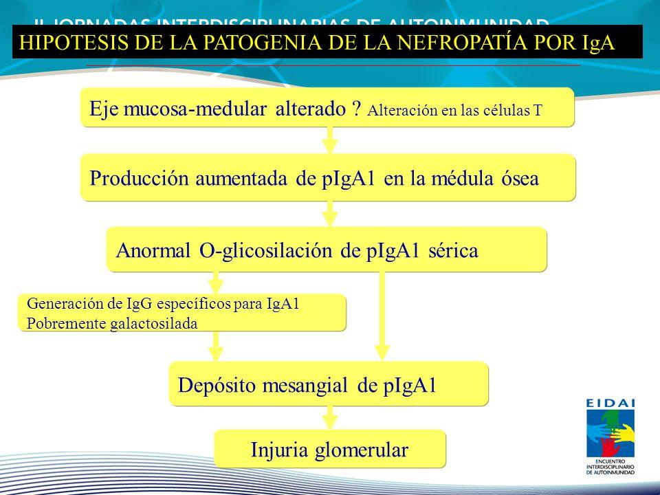 Eje mucosa-medular alterado ? Alteración en las células T Producción aumentada de pIgA1 en la médula ósea Depósito mesangial de pIgA1 Injuria glomerul