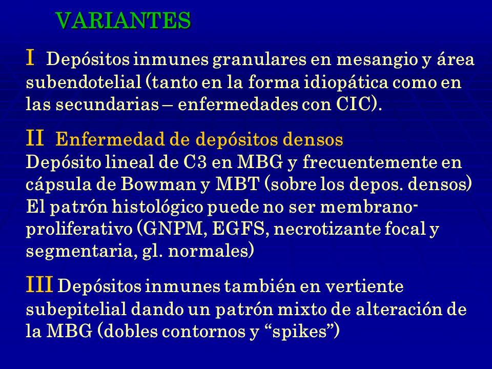 VARIANTES I Depósitos inmunes granulares en mesangio y área subendotelial (tanto en la forma idiopática como en las secundarias – enfermedades con CIC).