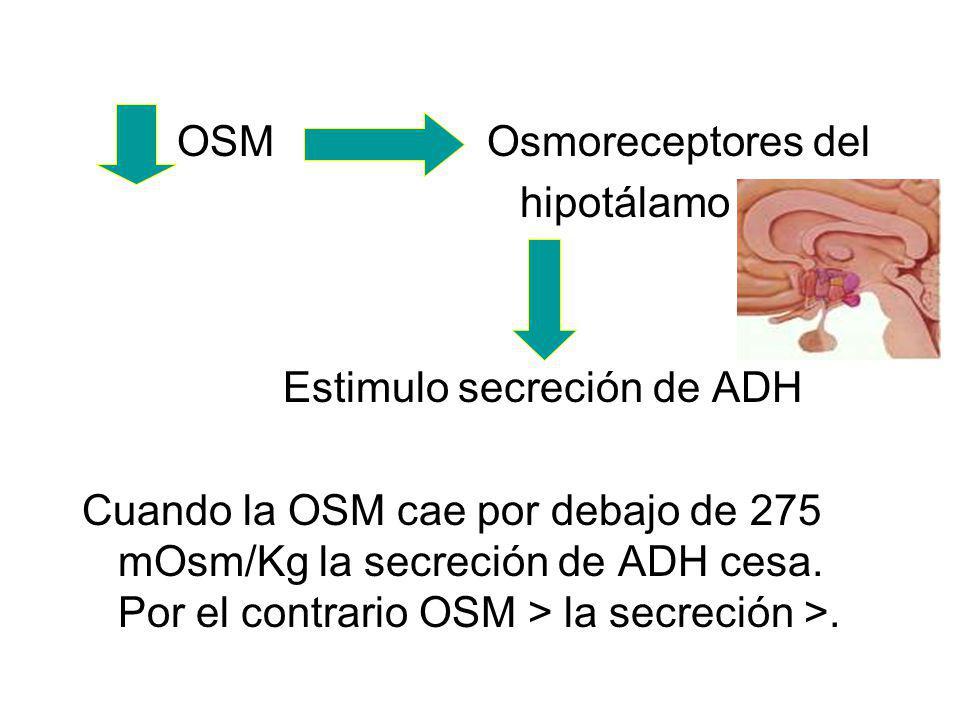 OSM Osmoreceptores del hipotálamo Estimulo secreción de ADH Cuando la OSM cae por debajo de 275 mOsm/Kg la secreción de ADH cesa.
