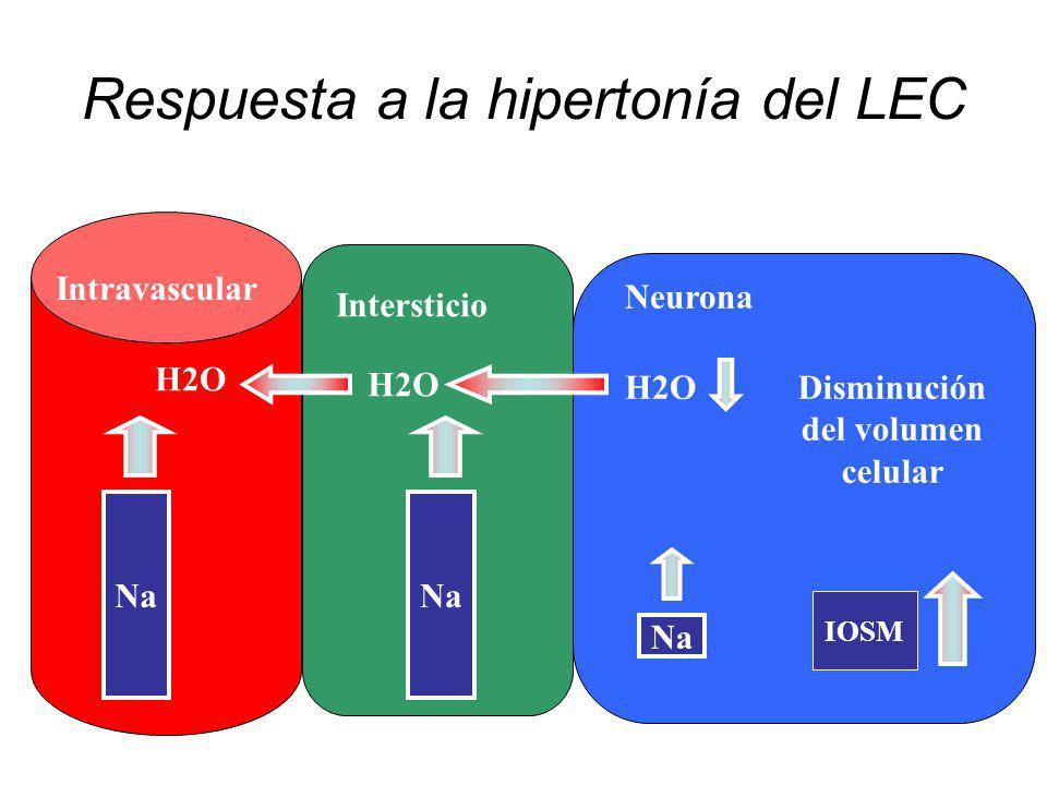Respuesta a la hipertonía del LEC Intersticio Intravascular Neurona Na H2O IOSM Disminución del volumen celular