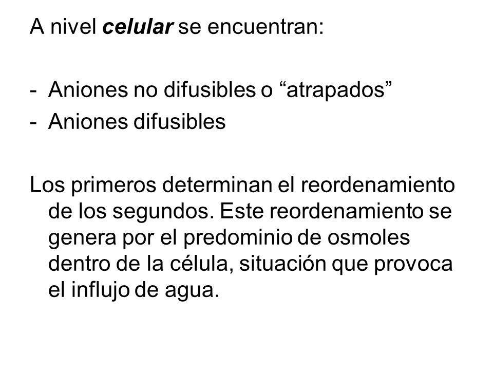 A nivel celular se encuentran: -Aniones no difusibles o atrapados -Aniones difusibles Los primeros determinan el reordenamiento de los segundos.
