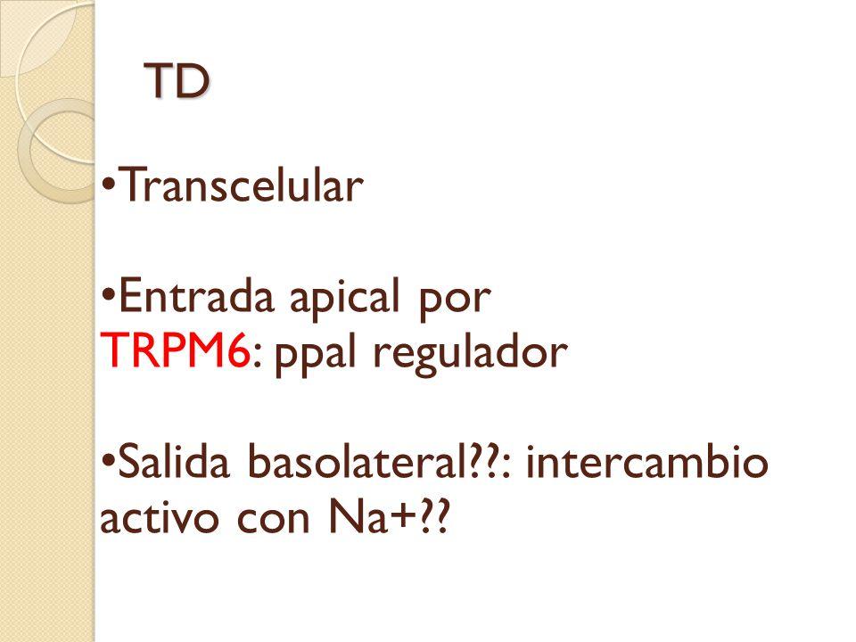 TD Transcelular Entrada apical por TRPM6: ppal regulador Salida basolateral??: intercambio activo con Na+??