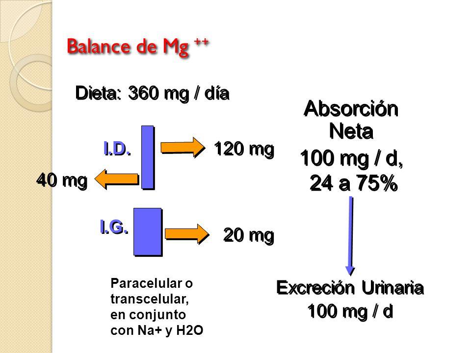 Balance de Mg ++ Dieta: 360 mg / día 120 mg 20 mg 40 mg Absorción Neta 100 mg / d, 24 a 75% Absorción Neta 100 mg / d, 24 a 75% Excreción Urinaria 100