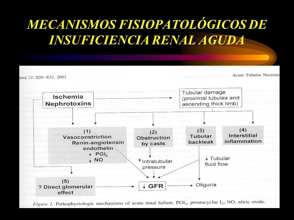 MECANISMOS FISIOPATOLÓGICOS DE INSUFICIENCIA RENAL AGUDA
