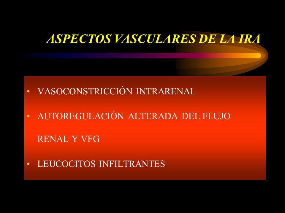 ASPECTOS VASCULARES DE LA IRA VASOCONSTRICCIÓN INTRARENAL AUTOREGULACIÓN ALTERADA DEL FLUJO RENAL Y VFG LEUCOCITOS INFILTRANTES