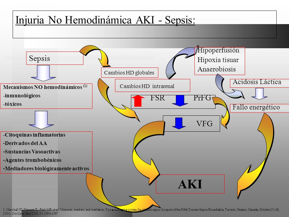 Injuria No Hemodinámica AKI - Sepsis: Sepsis Cambios HD intrarenal Cambios HD globales Mecanismos NO hemodinámicos (1) -inmunológicos -tóxicos VFG FSR