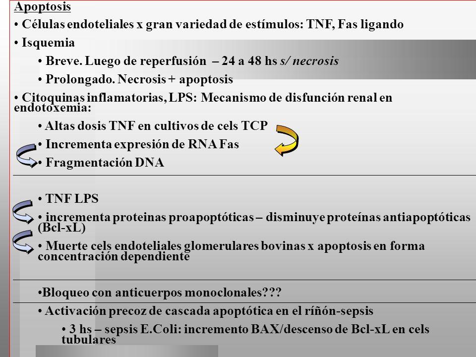 Apoptosis Células endoteliales x gran variedad de estímulos: TNF, Fas ligando Isquemia Breve. Luego de reperfusión – 24 a 48 hs s/ necrosis Prolongado