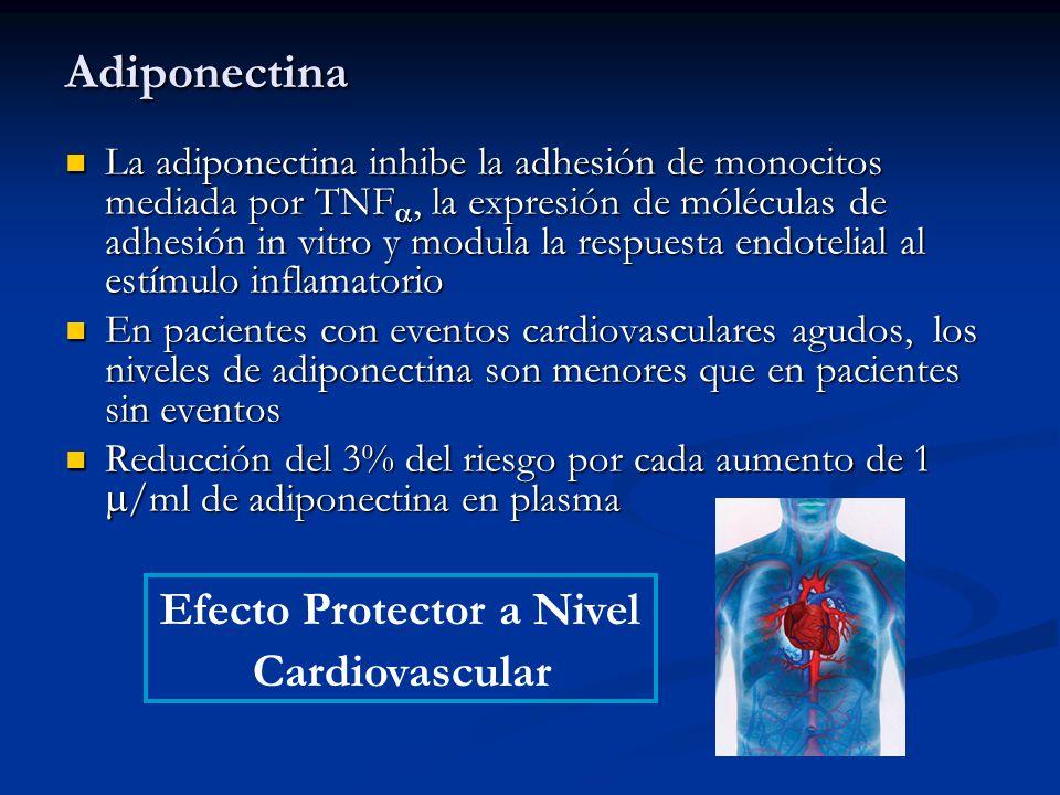 Adiponectina La adiponectina inhibe la adhesión de monocitos mediada por TNF, la expresión de móléculas de adhesión in vitro y modula la respuesta end
