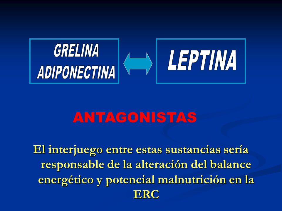 Leptina Péptido de 16 kD, con dos variables conformacionales Péptido de 16 kD, con dos variables conformacionales Producido exlusivamente en el tejido adiposo Producido exlusivamente en el tejido adiposo Regula la Masa Corporal a través de un incremento de la tasa metabólica, y de su efecto anorexígeno a nivel hipotalámico Regula la Masa Corporal a través de un incremento de la tasa metabólica, y de su efecto anorexígeno a nivel hipotalámico Sus niveles plasmáticos se encuentran estrictamente relacionados con sexo, edad y BMI Sus niveles plasmáticos se encuentran estrictamente relacionados con sexo, edad y BMI Relación directa con insulinemia Relación directa con insulinemia Posible relación con eritropoyesis, angiogénesis, metabolismo óseo y reproducción Posible relación con eritropoyesis, angiogénesis, metabolismo óseo y reproducción