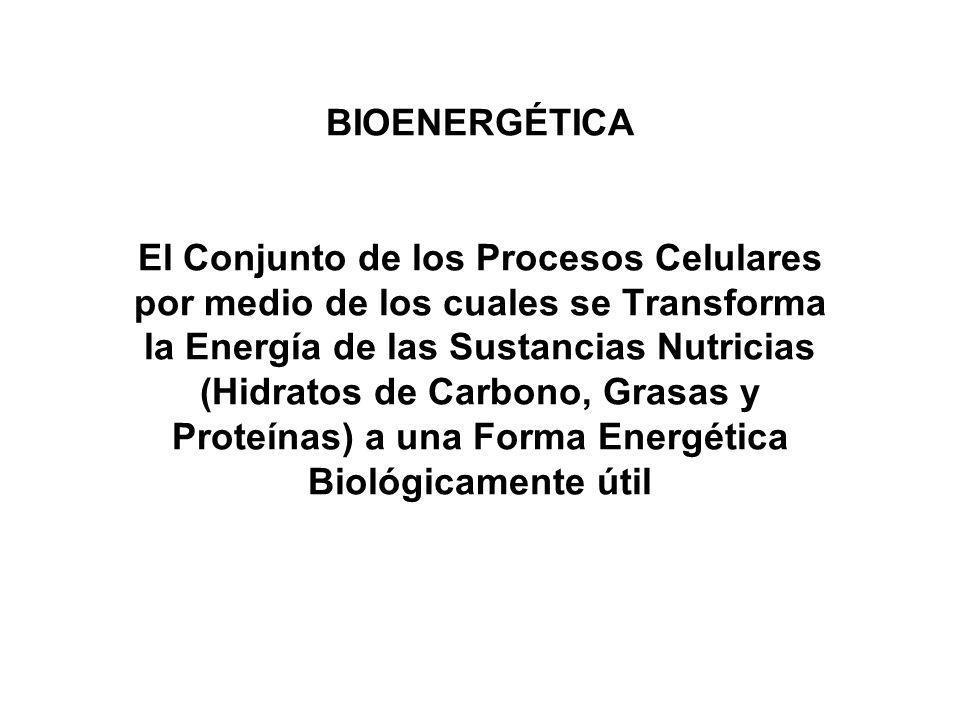 BIOENERGÉTICA El Conjunto de los Procesos Celulares por medio de los cuales se Transforma la Energía de las Sustancias Nutricias (Hidratos de Carbono,