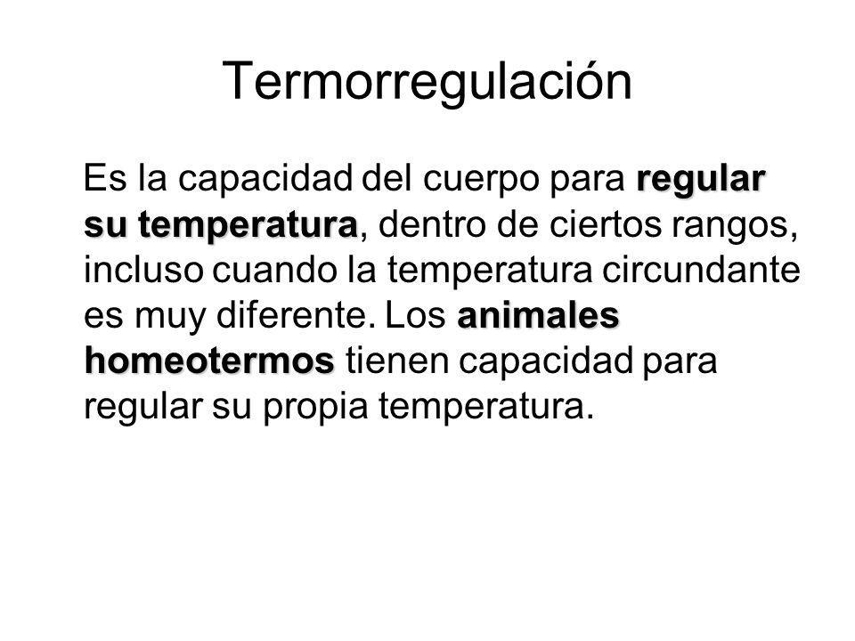 Termorregulación regular su temperatura animales homeotermos Es la capacidad del cuerpo para regular su temperatura, dentro de ciertos rangos, incluso