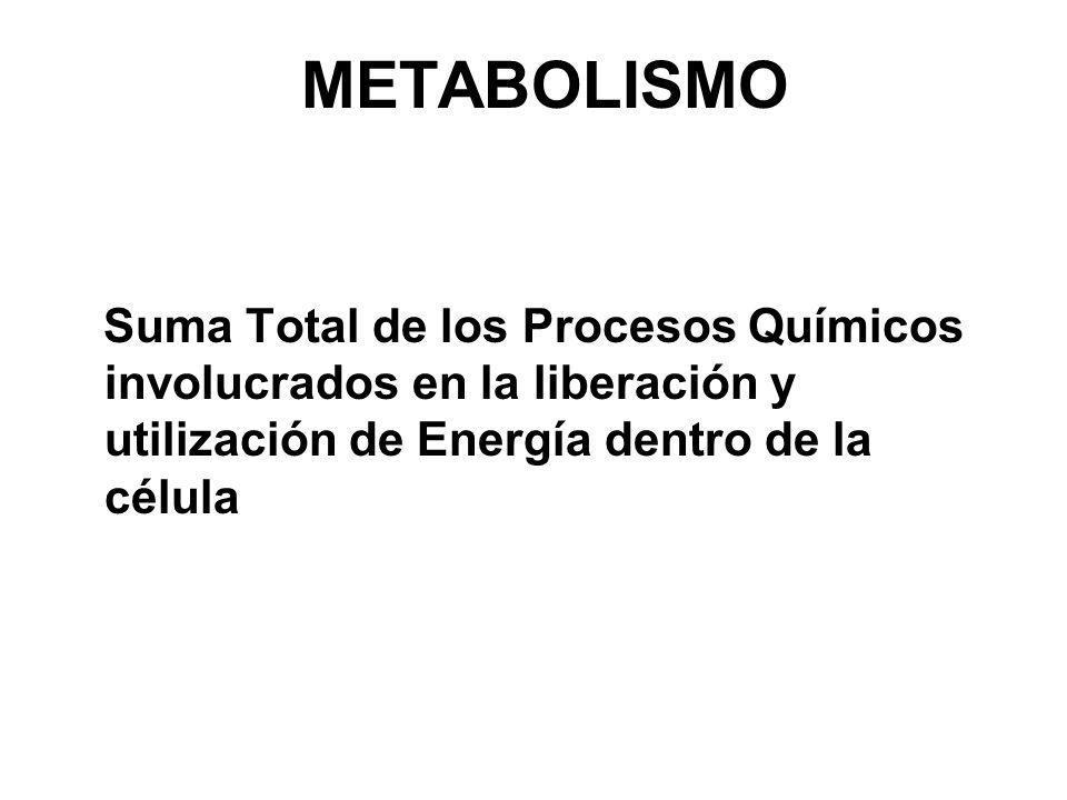 METABOLISMO Suma Total de los Procesos Químicos involucrados en la liberación y utilización de Energía dentro de la célula