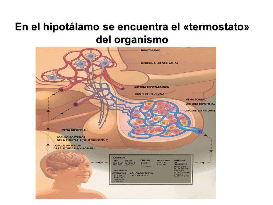 BIOENERGÉTICA El Conjunto de los Procesos Celulares por medio de los cuales se Transforma la Energía de las Sustancias Nutricias (Hidratos de Carbono, Grasas y Proteínas) a una Forma Energética Biológicamente útil