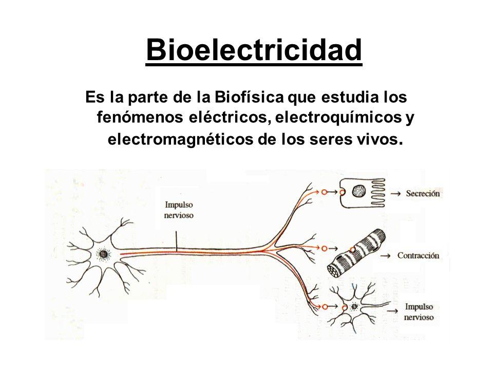 Bioelectricidad Es la parte de la Biofísica que estudia los fenómenos eléctricos, electroquímicos y electromagnéticos de los seres vivos.