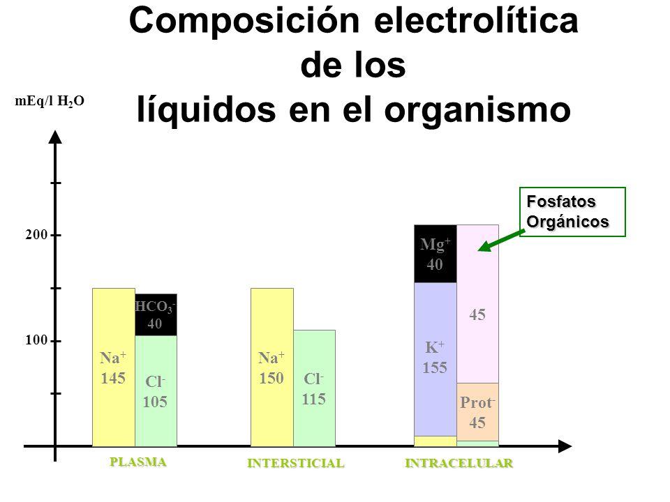 Composición electrolítica de los líquidos en el organismo Na + 145 Cl - 105 100 200 mEq/l H 2 O PLASMA INTERSTICIALINTRACELULAR Na + 150 Cl - 115 K + 155 Prot - 45 Fosfatos Orgánicos Mg + 40 HCO 3 - 40
