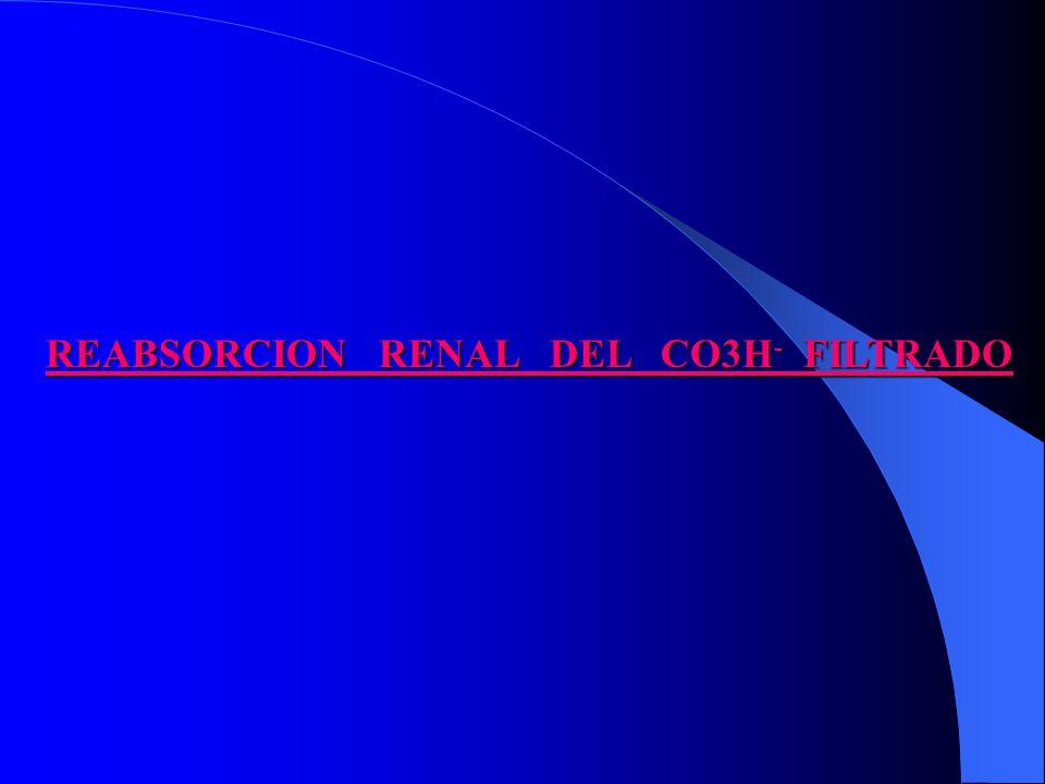 REABSORCION RENAL DEL CO3H - FILTRADO