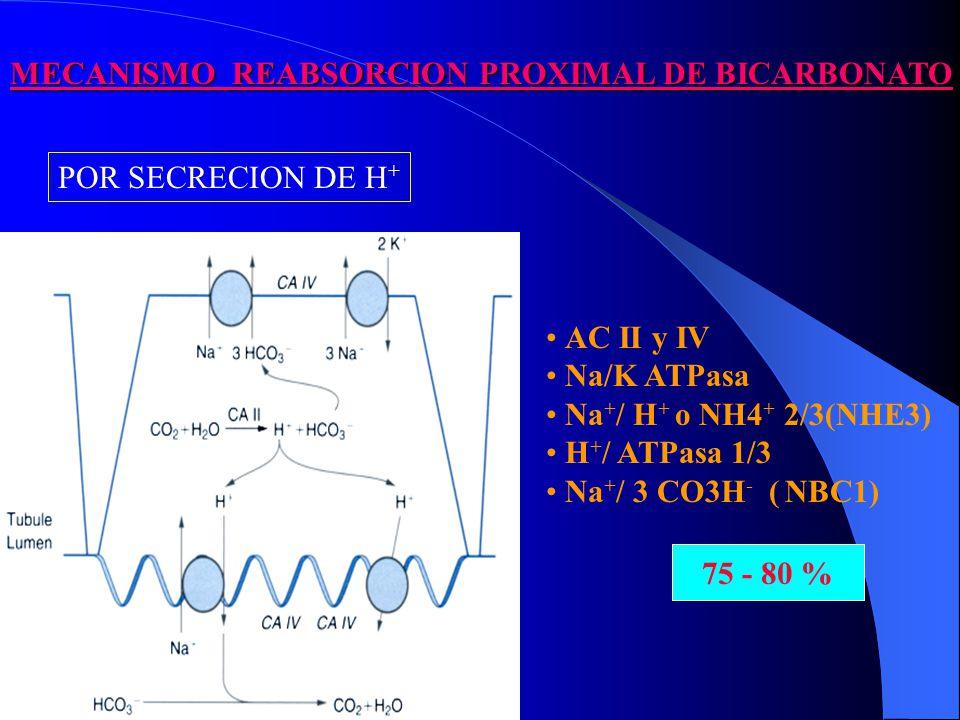 MECANISMO REABSORCION PROXIMAL DE BICARBONATO AC II y IV Na/K ATPasa Na + / H + o NH4 + 2/3(NHE3) H + / ATPasa 1/3 Na + / 3 CO3H - ( NBC1) 75 – 80 % 75 - 80 % POR SECRECION DE H +