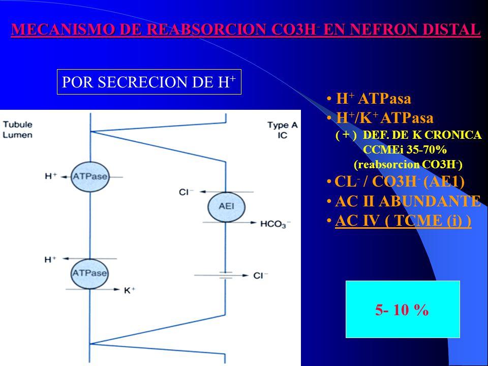 MECANISMO DE REABSORCION CO3H - EN NEFRON DISTAL MECANISMO DE REABSORCION CO3H - EN NEFRON DISTAL 5- 10 % H + ATPasa H + /K + ATPasa ( + ) DEF.