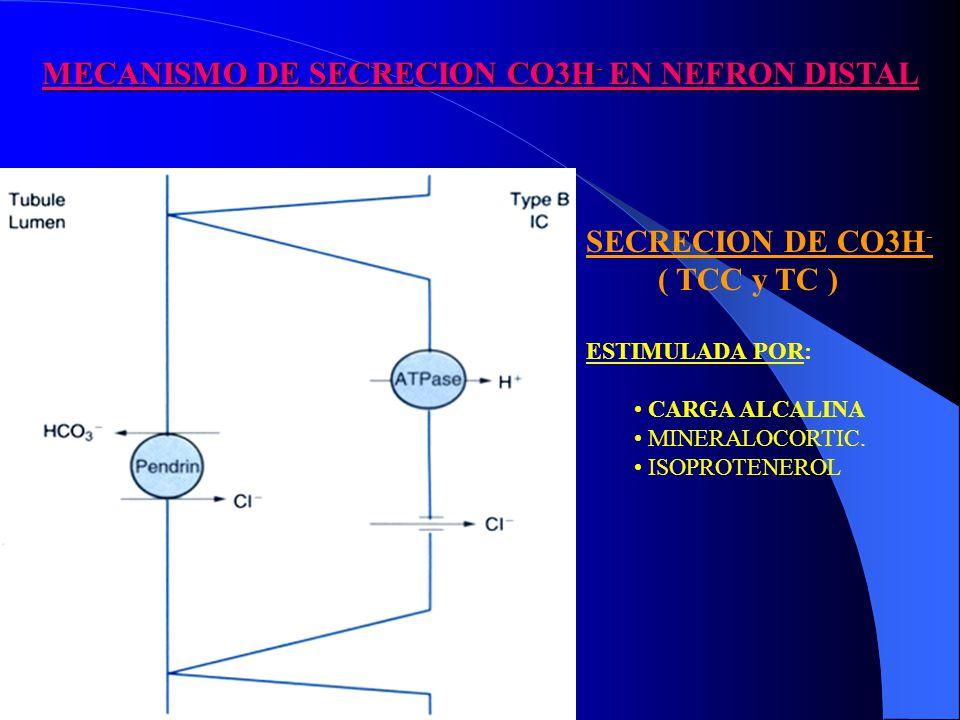 MECANISMO DE SECRECION CO3H - EN NEFRON DISTAL SECRECION DE CO3H - ( TCC y TC ) ESTIMULADA POR: CARGA ALCALINA MINERALOCORTIC.