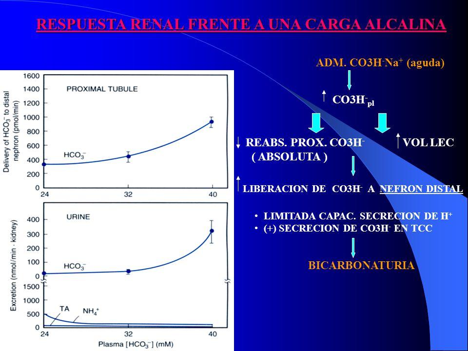RESPUESTA RENAL FRENTE A UNA CARGA ALCALINA ADM.CO3H - Na + (aguda) CO3H - pl REABS.