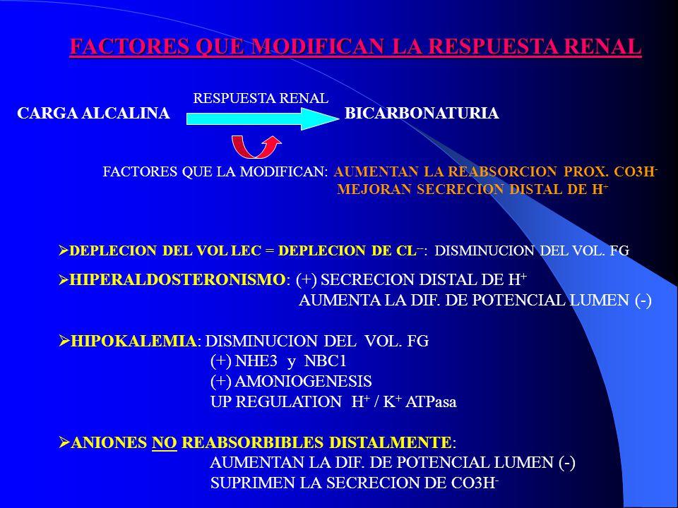 FACTORES QUE MODIFICAN LA RESPUESTA RENAL CARGA ALCALINA BICARBONATURIA RESPUESTA RENAL FACTORES QUE LA MODIFICAN: AUMENTAN LA REABSORCION PROX.